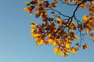 Kweeknieuws november afbeelding