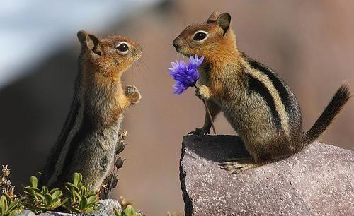ruben-hoekstra-auteur-wanneer-is-liefde-goed-genoeg-bloeiklas-de-kwekerij