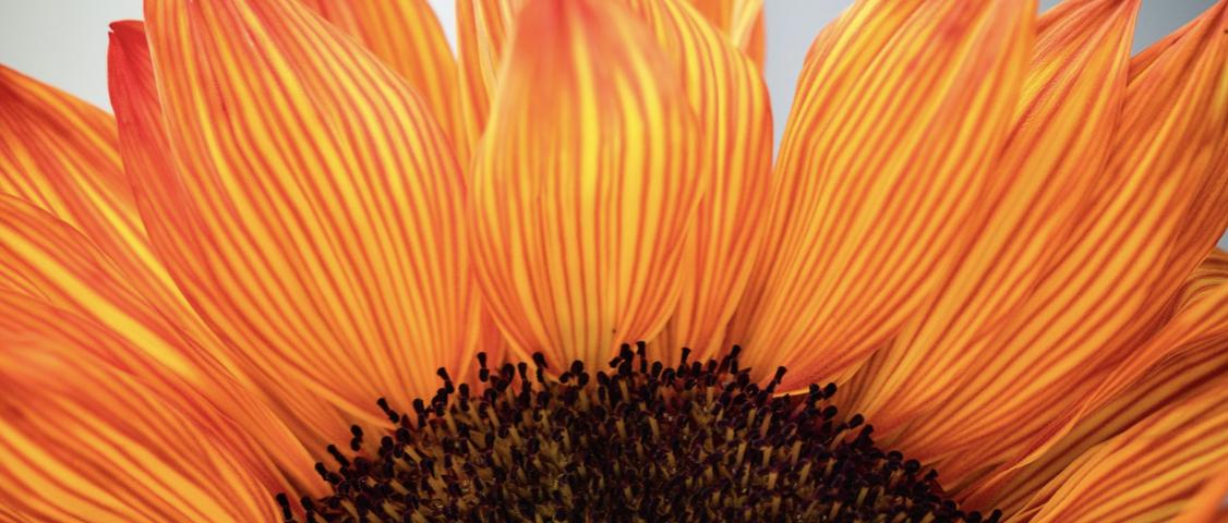 bloeiklas-dankbaarheid